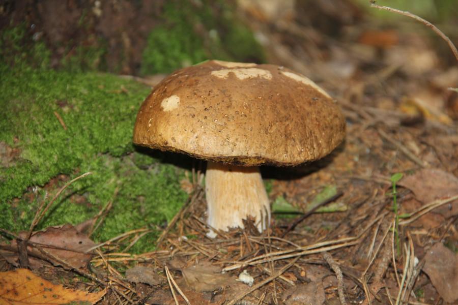 Серпухов, по грибы 544