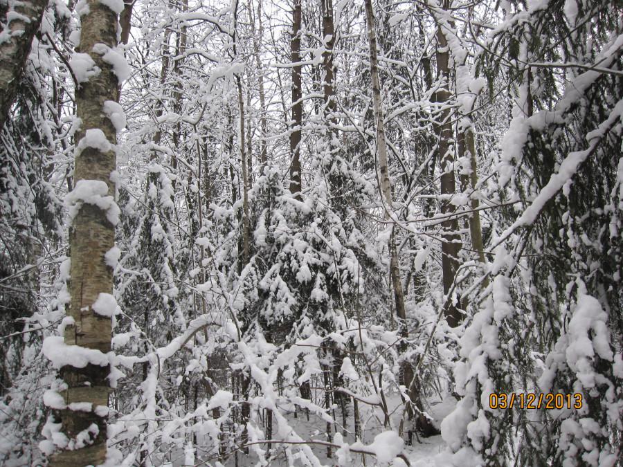 лыжный день 016