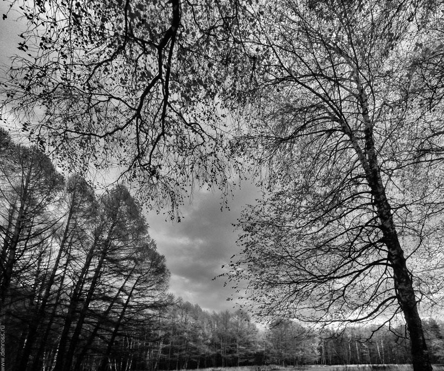 Untitled_Panorama2 bw
