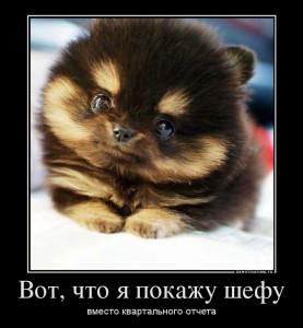 17197036_vot-chto-ya-pokazhu-shefu