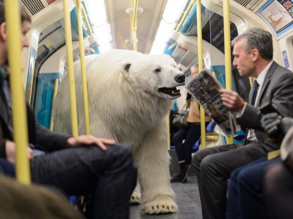 rex_polar_bear_london_2_kb_150127_4x3_992