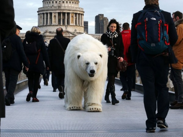 rex_polar_bear_london_5_kb_150127_4x3_992