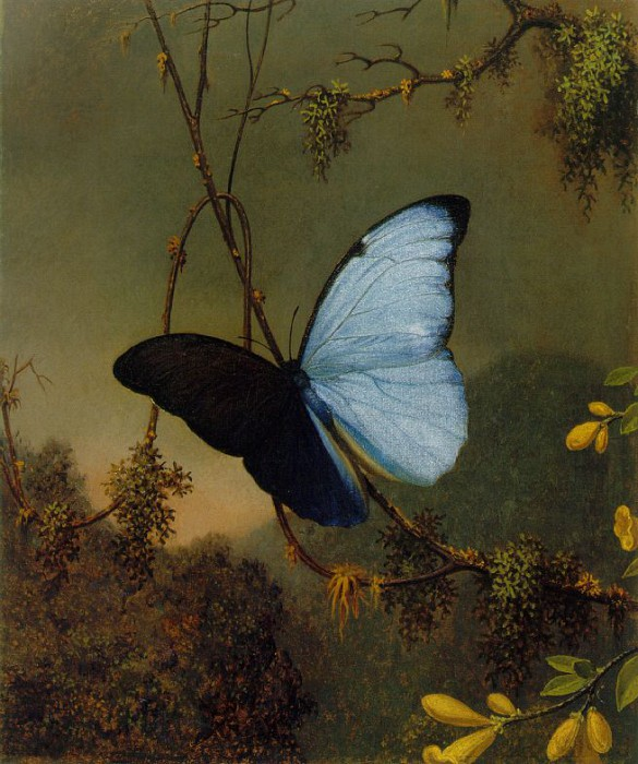 Бабочка Синяя морфо