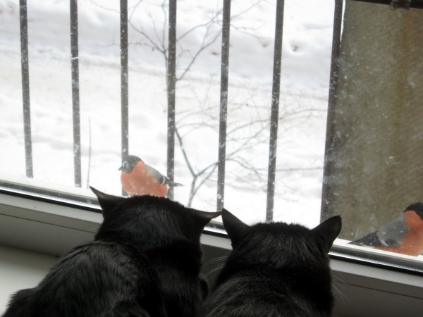 кошки и снегири