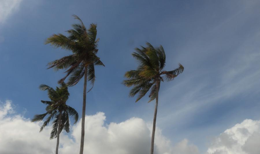 пальмы-1200