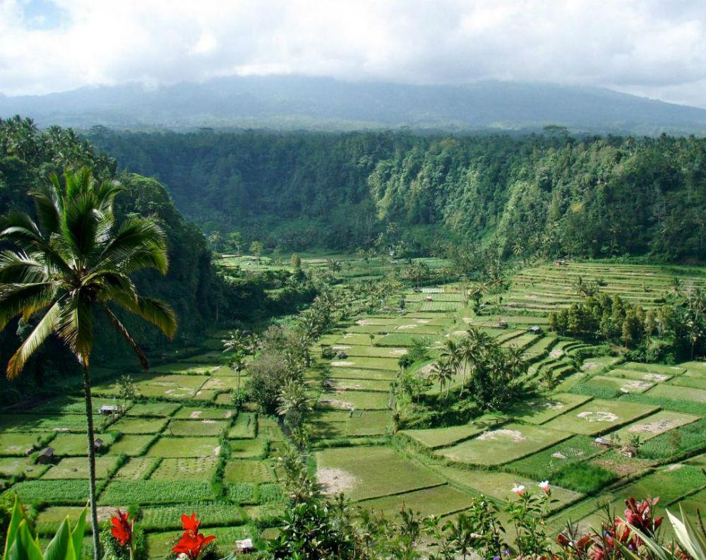 Разнообразный ландшафт Бали
