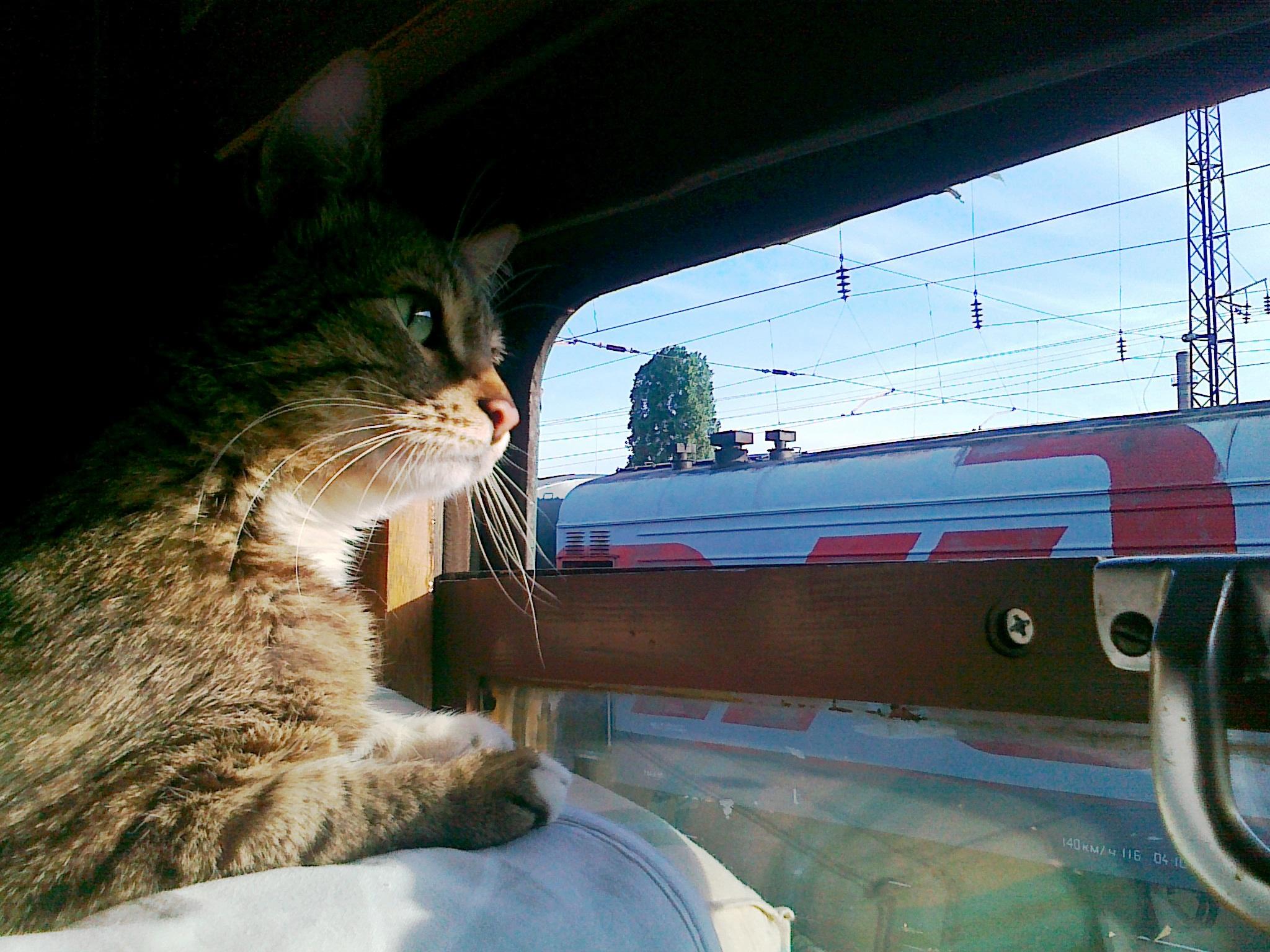 Смешная картинка поезд на море