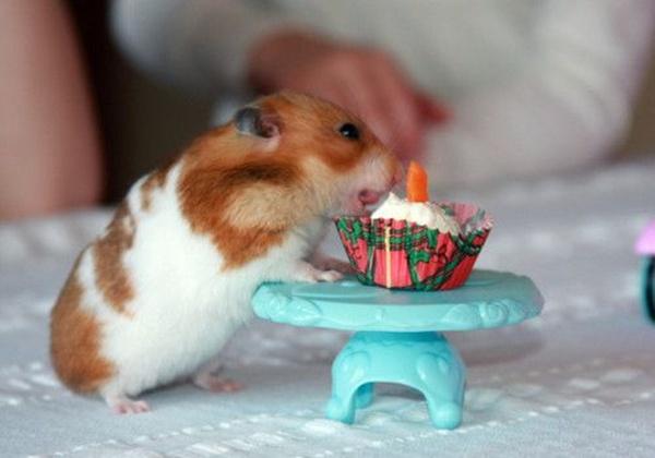 hamsterwoman birthday
