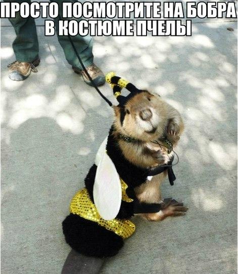 VIDvky_yqB4