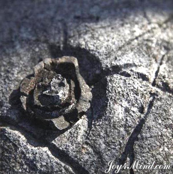 Китайские-каменные-цветы