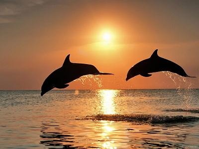 дельфины2