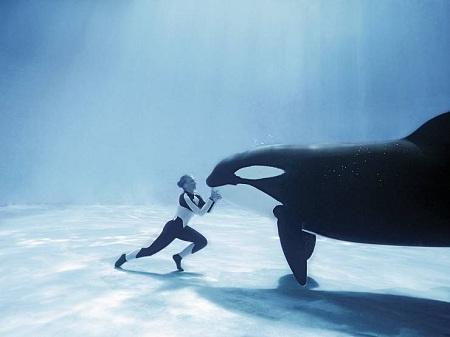 дельфины7