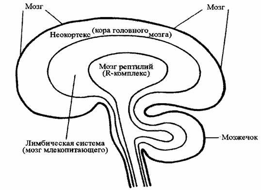 триединый-мозг