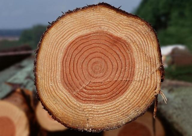 круги дерева