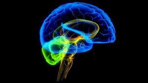 свойство мозга