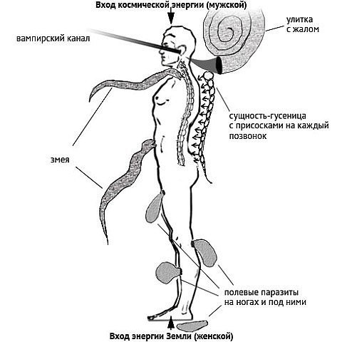 как убрать паразитов в организме человека