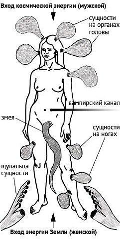 паразиты в человеке как определить