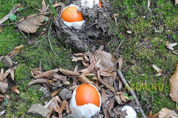 Вулканы, каменная яйцекладка и плодоносные горы
