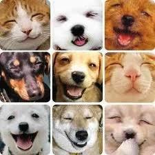 животных