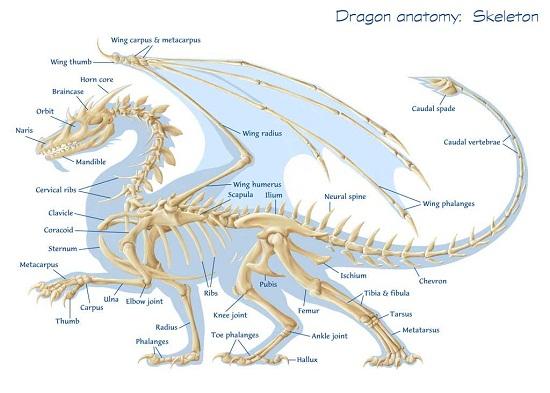 дракона