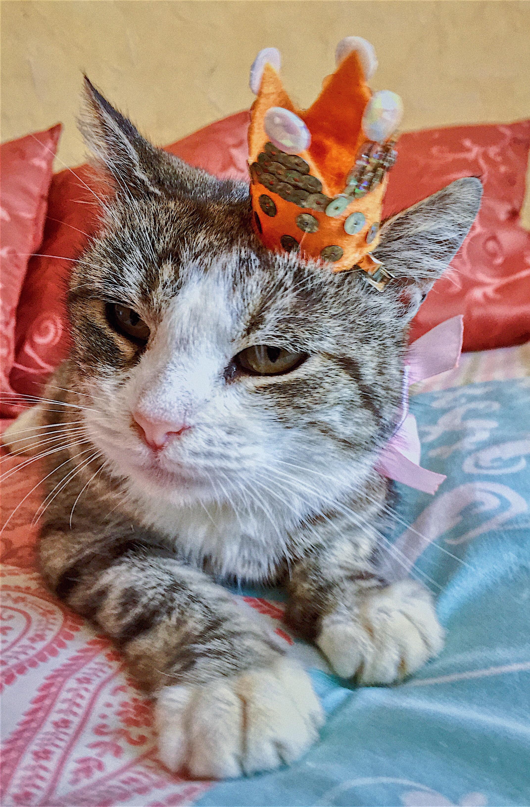 Сказочный кот гипнотизёр 4 буквы