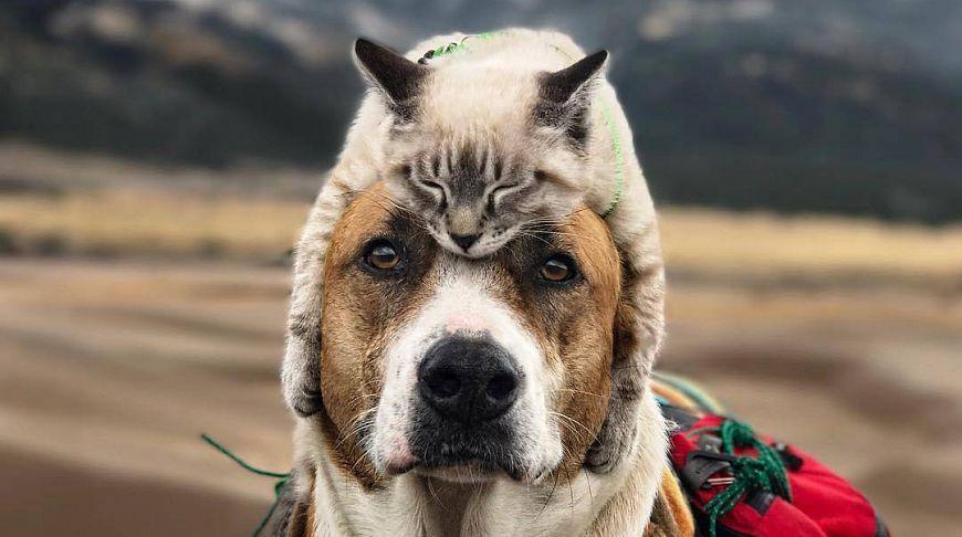 Целительские способности домашних животных