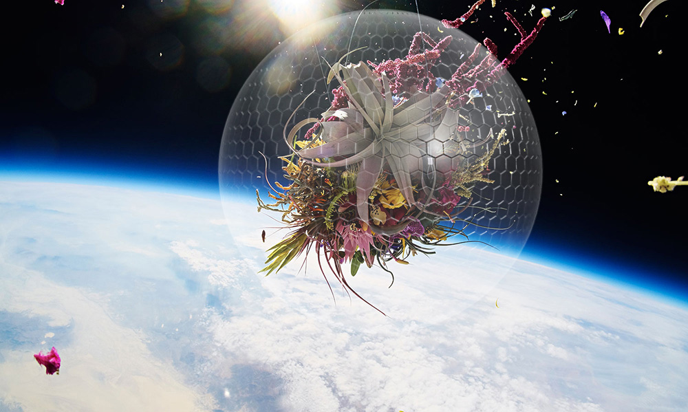 Создание душ и ограничения памяти. Космический гербарий