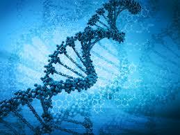 ДНК 1