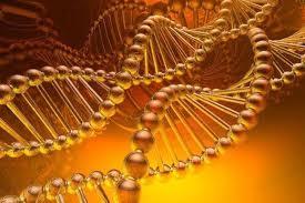 матрицу ДНК