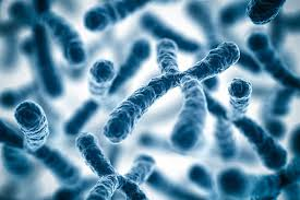 хромосом