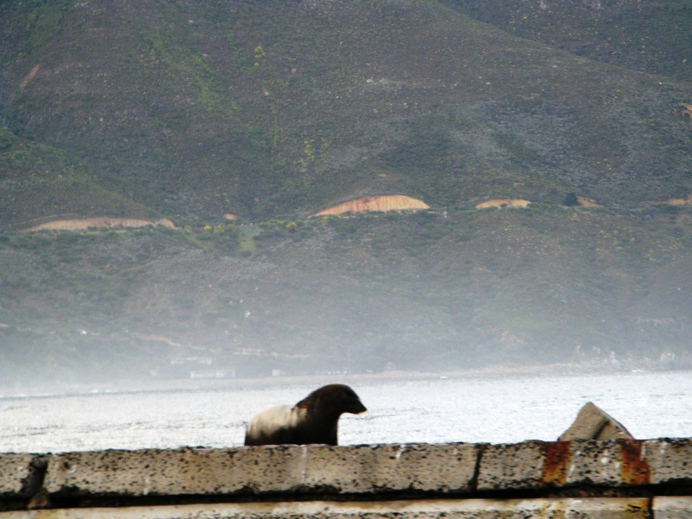 SouthAfrica 0413