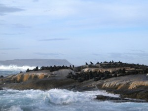 SouthAfrica 0446