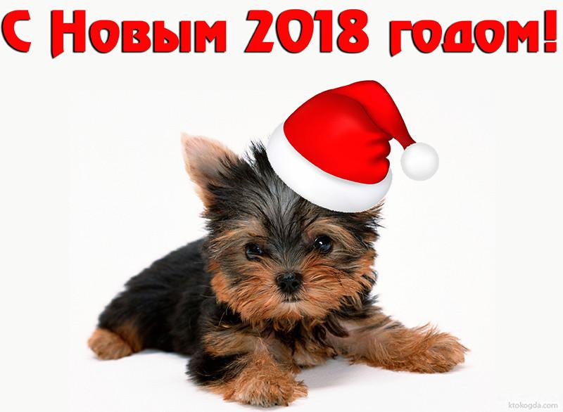 s-novim-2018-godom-15