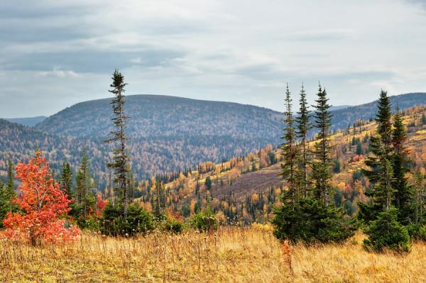 Осень в Тайге