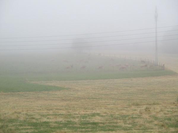 1. Туман