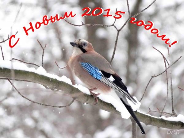 Soika_sneg 14122014_поздравление