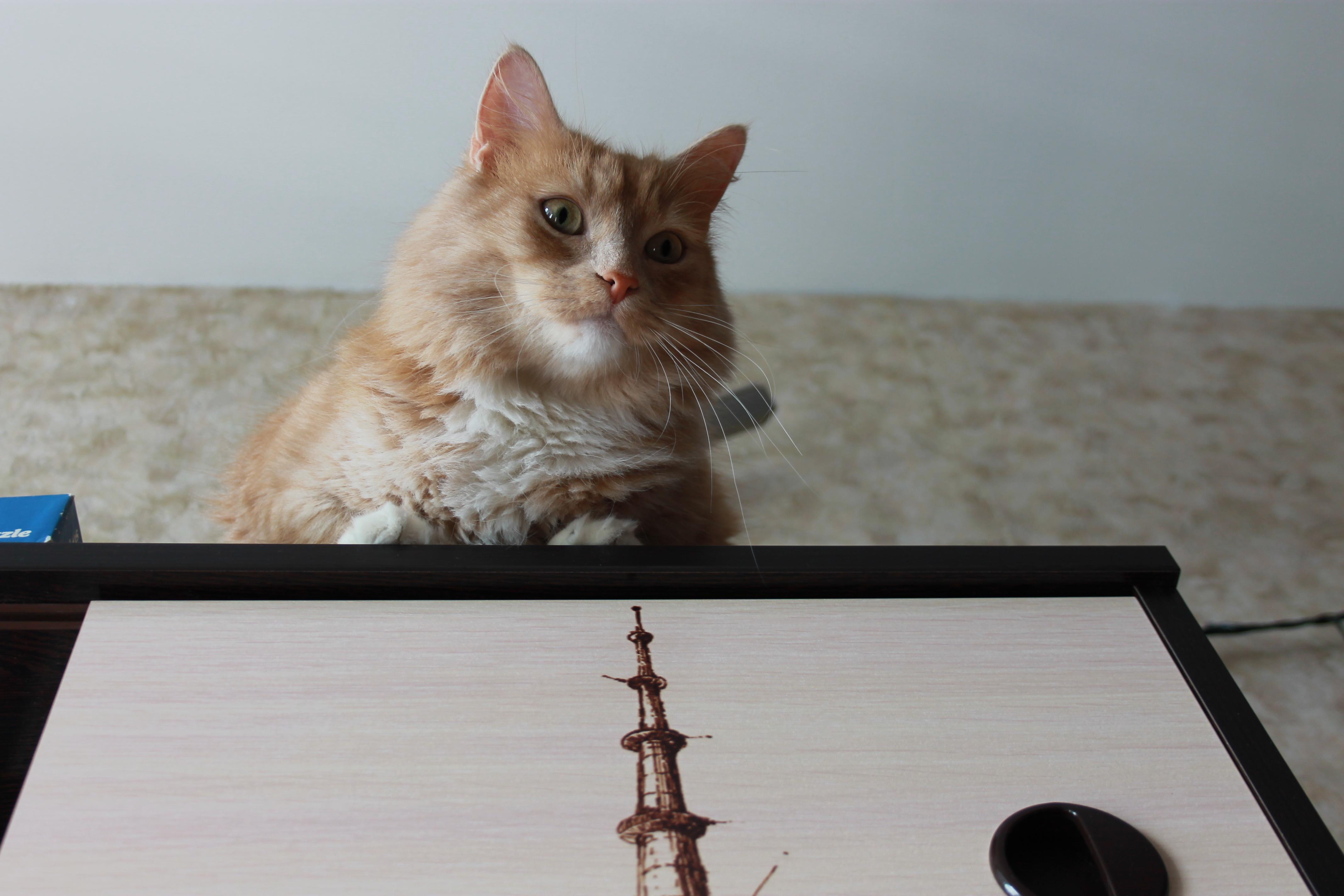 Я кот который сидит на шкафу