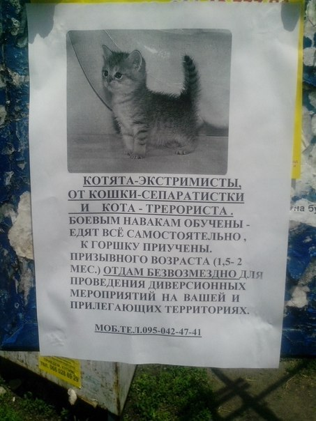 коты против сала