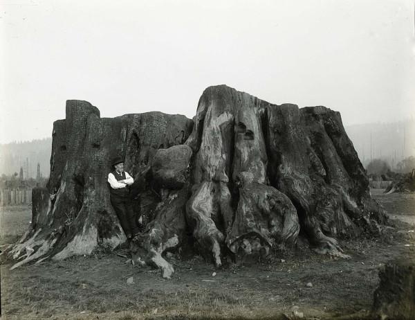 Мега деревья