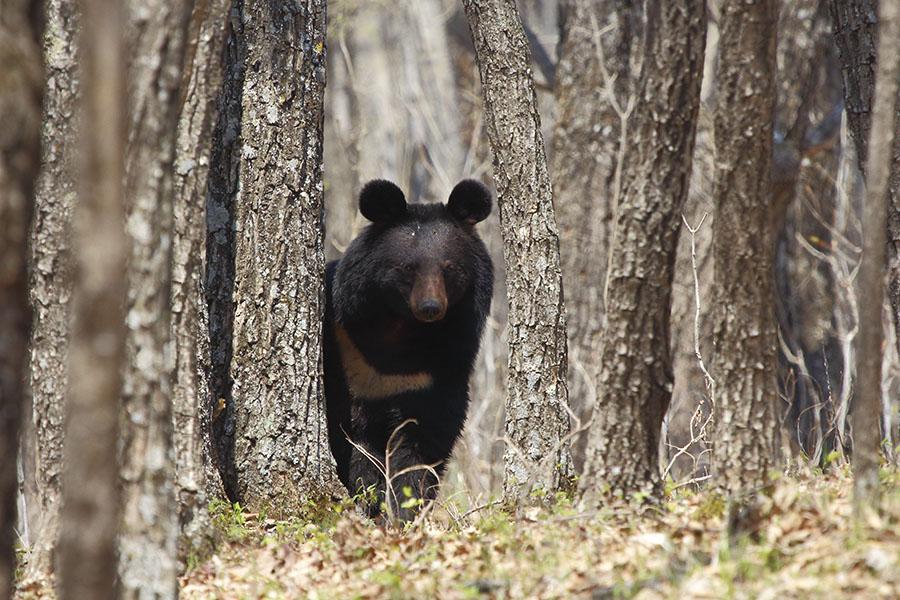 медведь-01