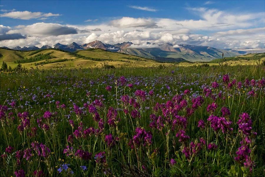 чистый фото алтайских лугов и долин лучшие