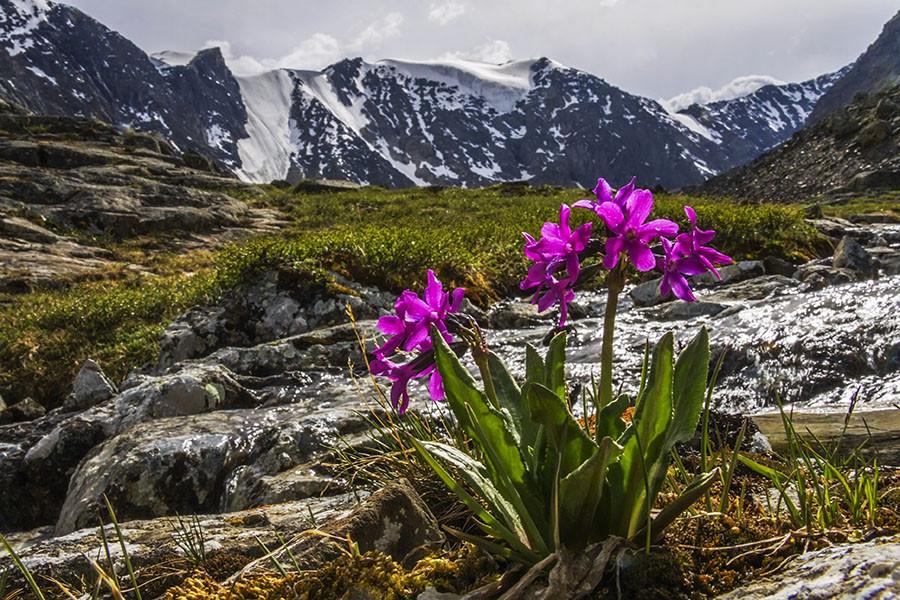 такое судно горные цветы краснодарского края фото названия собираются туда