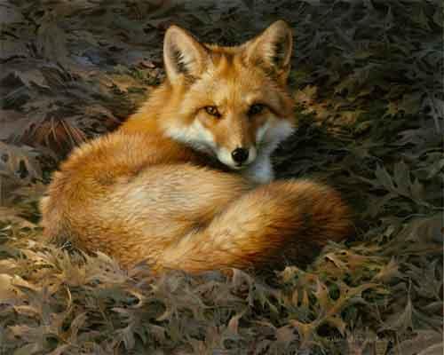 0015-fox