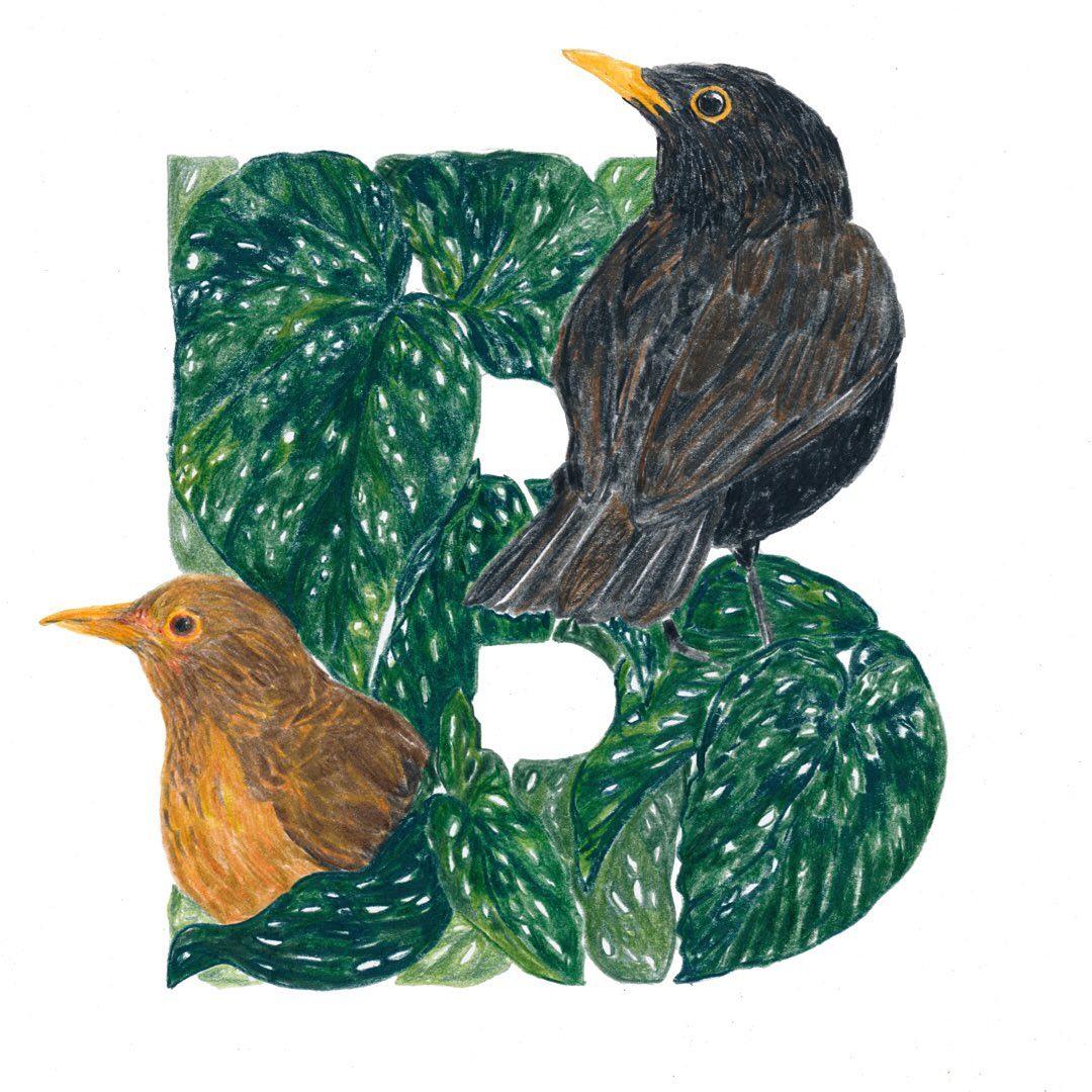 Blackbird and Begonia