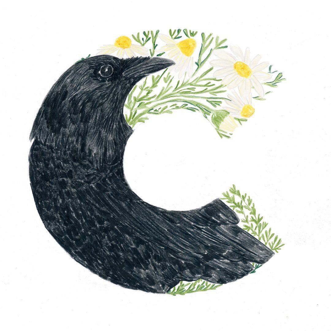 Crow and Camomile