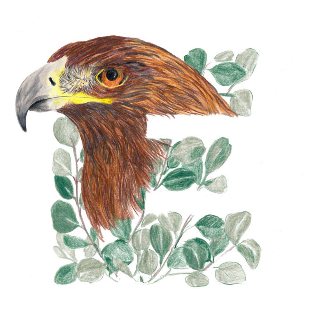 Eagle and Eucalyptus
