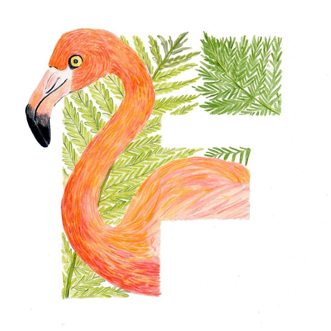 Flamingo and Fern