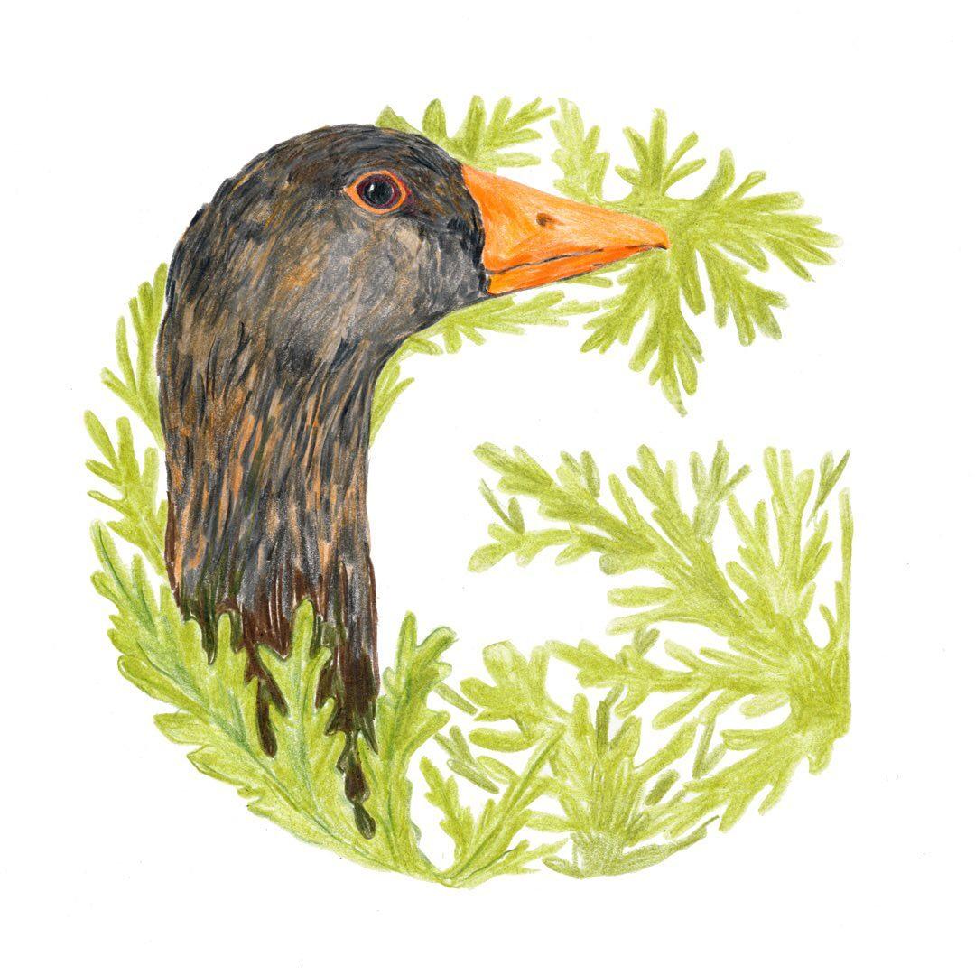 Goose and Geranium