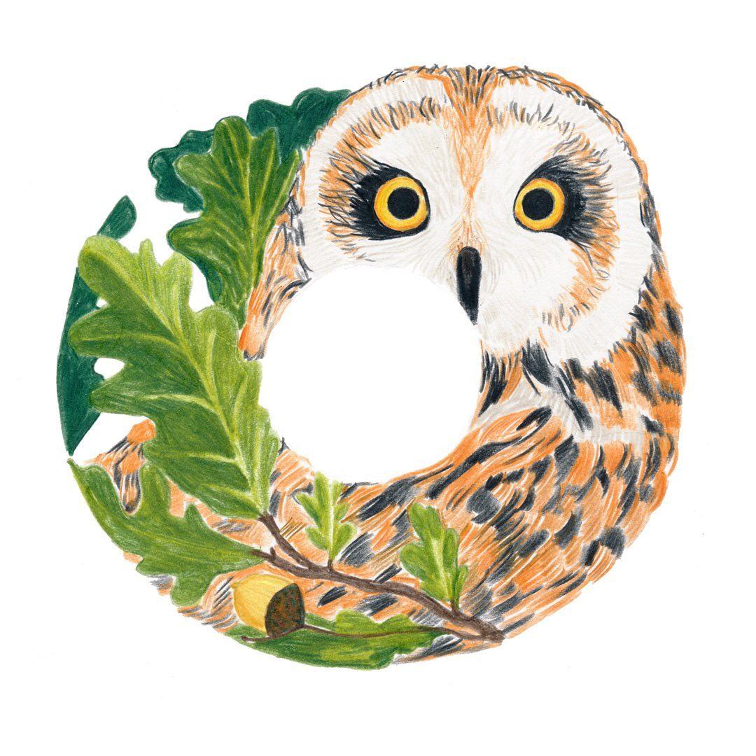 Owl and Oak tree