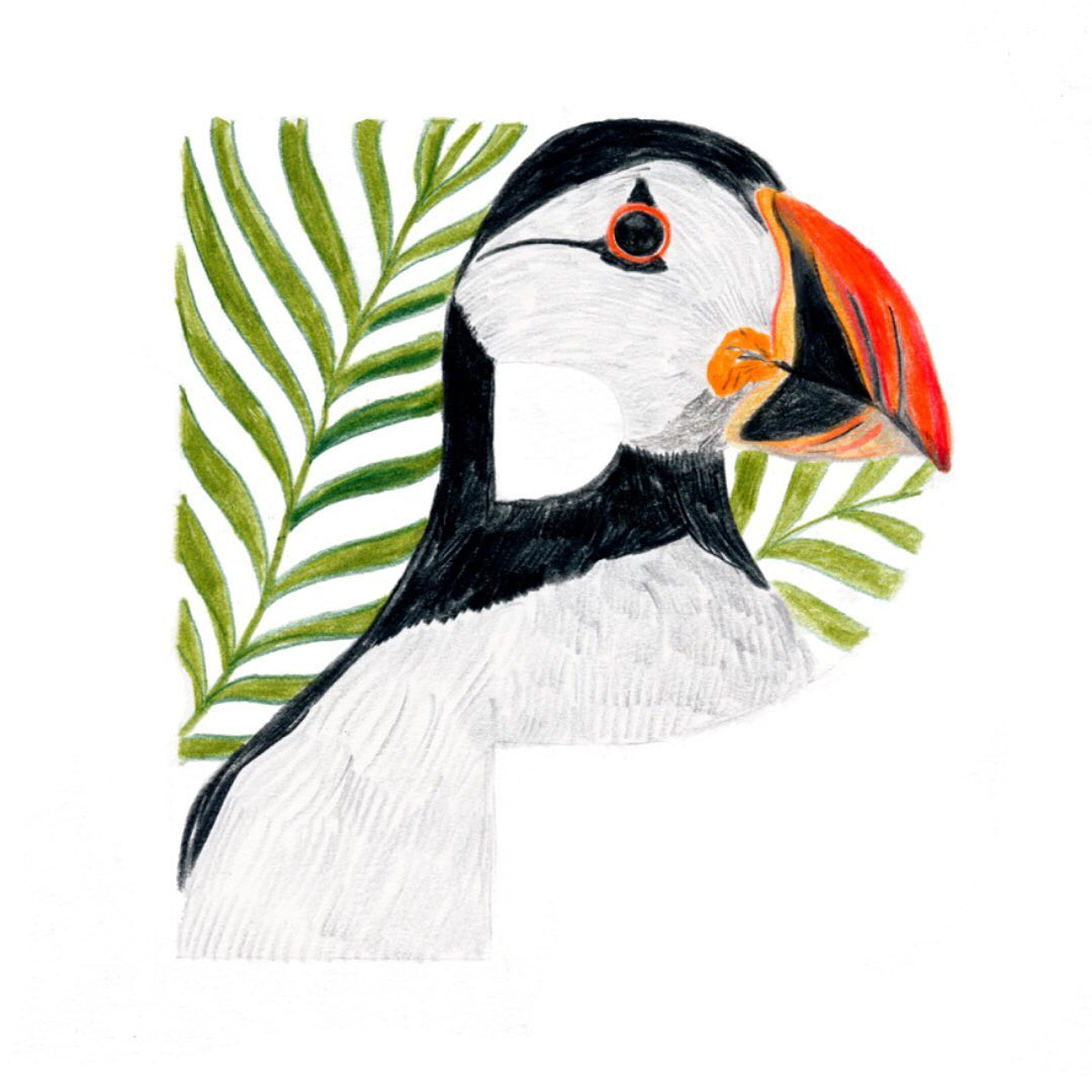 Puffin and Palm